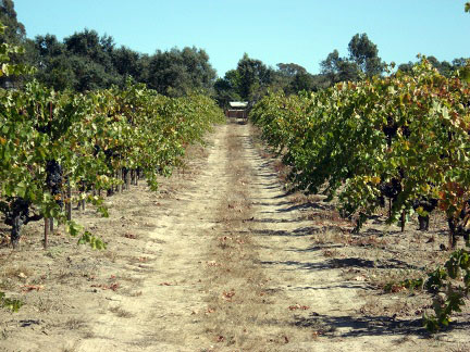 road to winery