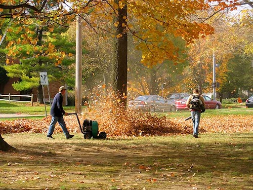5 Tips for Effective Leaf Removal from a Handy Homeowner
