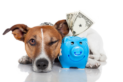 The Costs of Caring for Your Dog