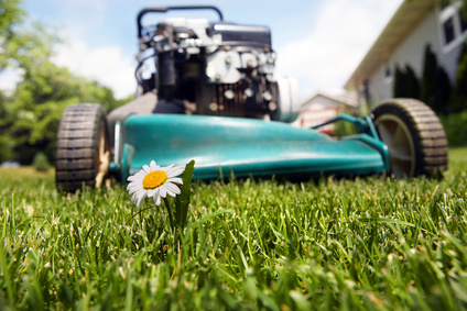 Which is Better: DIY or Professional Lawn Care?
