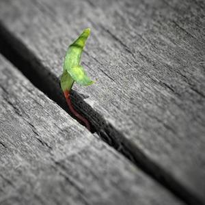 plant in gap