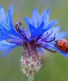 2 Keys to Catching the Elusive Savings Bug