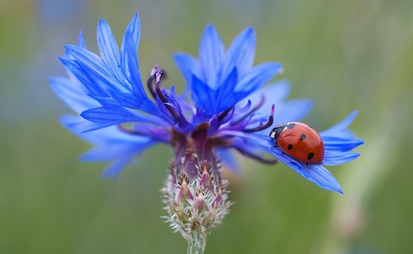 lady-bug-on-a-flower