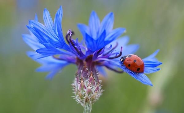 lady-bug-on-a-flower
